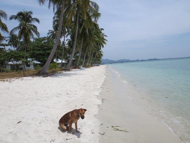Claudia hat einen Hundefreund gefunden: Beachy II